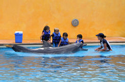 Kids and dophins. Pic of kids preparing to swim with dolphins at Vallarta Adventures at Puerto Vallarta Mexico royalty free stock photos