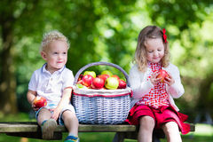 Kids eating apple in the garden. Child picking apples on a farm in autumn. Little girl and boy playing in apple tree orchard. Kids pick fruit in a basket stock image