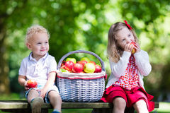 Kids eating apple in the garden. Child picking apples on a farm in autumn. Little girl and boy playing in apple tree orchard. Kids pick fruit in a basket stock photos