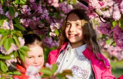 Kids enjoying cherry blossom. Pink is our favorite. Children enjoy spring garden. Sakura garden. Sisters walk park. Sakura trees. Kids pink flowers of sakura royalty free stock photos