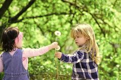 Kids enyoj happy day. Boy give dandelion flower for girl. Boy give dandelion flower for girl in spring or summer park. Kids on idyllic sunny day outdoor Stock Photography