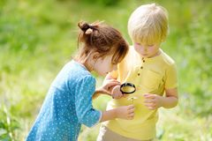 Kids exploring nature with magnifying glass. Close up. Little boy and girl looking with magnifying glass on camomile stock images