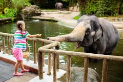 Kids feed elephant in zoo. Family at animal park. Family feeding elephant in zoo. Children feed Asian elephants in tropical safari park during summer vacation in royalty free stock image