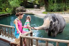 Kids feed elephant in zoo. Family at animal park. Family feeding elephant in zoo. Mother and child feed Asian elephants in tropical safari park during summer royalty free stock images