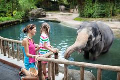 Kids feed elephant in zoo. Family at animal park stock images