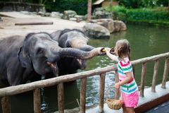 Kids feed elephant in zoo. Family at animal park. Stock Image