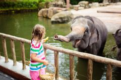 Kids feed elephant in zoo. Family at animal park. Family feeding elephant in zoo. Children feed Asian elephants in tropical safari park during summer vacation in stock photography