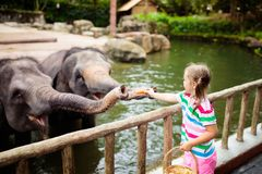 Kids feed elephant in zoo. Family at animal park. Family feeding elephant in zoo. Children feed Asian elephants in tropical safari park during summer vacation in stock images