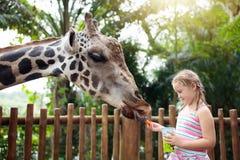 Kids feed giraffe at zoo. Children at safari park. Family feeding giraffe in zoo. Children feed giraffes in tropical safari park during summer vacation. Kids royalty free stock photography
