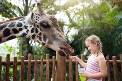 Kids feed giraffe at zoo. Children at safari park. Family feeding giraffe in zoo. Children feed giraffes in tropical safari park during summer vacation. Kids royalty free stock images