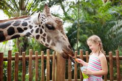 Kids feed giraffe at zoo. Children at safari park. Family feeding giraffe in zoo. Children feed giraffes in tropical safari park during summer vacation. Kids stock image