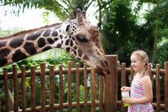 Kids feed giraffe at zoo. Children at safari park. Family feeding giraffe in zoo. Children feed giraffes in tropical safari park during summer vacation. Kids royalty free stock photos