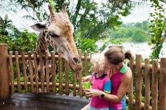 Kids feed giraffe at zoo. Family at safari park. Royalty Free Stock Images