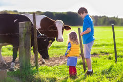 Kids feeding cow on a farm. Happy kids feeding cows on a farm. Little girl and school age boy feed cow on a country field in summer. Farmer children play with Royalty Free Stock Photos