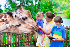 Kids feeding giraffe in a zoo Stock Image