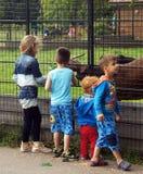 Kids feeding a goat Royalty Free Stock Photos