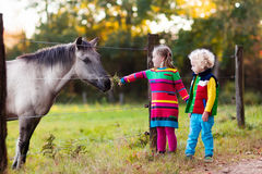 Kids feeding horse on a farm. Family on a farm in autumn. Kids feed a horse. Outdoor fun children. Toddler boy and girl playing with pets. Child feeding animal Stock Image