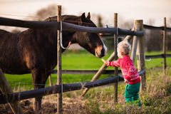 Kids feeding horse on a farm. Family on a farm in autumn. Kids feed a horse. Outdoor fun children. Toddler boy playing with pets. Child feeding animal on a ranch stock images