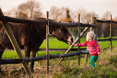 Kids feeding horse on a farm. Family on a farm in autumn. Kids feed a horse. Outdoor fun children. Toddler boy playing with pets. Child feeding animal on a ranch Stock Image