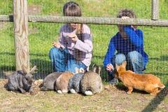 Kids feeding rabbits Stock Images