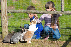 Kids feeding rabbits Stock Photos
