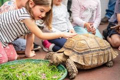 Kids feeding turtle in EDINBURGH BUTTERFLY and INSECT WORLD.Selected focus