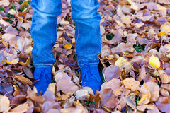 Kids feet in autumn leaves Stock Image