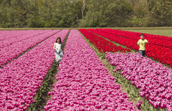 Kids in a flowerfield. Hillegom, Holland - May 5, 2016: A boy and a girl run through a flower field with tulips of many colors in Hillegom, Holland on May 5 Stock Image