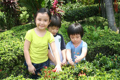 Kids at the garden. Three children having great time in the garden Stock Images