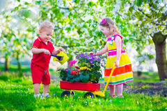 Kids in a garden with blooming cherry trees Stock Images
