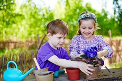 Kids gardening. Cute friends replanting African violets outdoors Stock Images