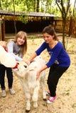 Kids girl feeding baby goat from nipple milk bottle Stock Image