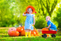 Kids at Halloween pumpkin patch. Kids playing at pumpkin patch at Halloween. Children play and pick pumpkins on a farm. Toddler girl and baby boy in a wheel Stock Photography