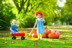 Kids at Halloween pumpkin patch Royalty Free Stock Images