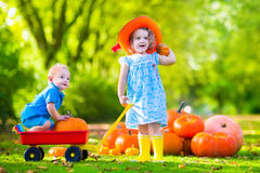 Kids at Halloween pumpkin patch. Kids playing at pumpkin patch at Halloween. Children play and pick pumpkins on a farm. Toddler girl and baby boy in a wheel Royalty Free Stock Images