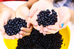 Kids hands holding tasty ripe bilberries,. Close up Stock Photo