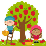 Kids harvesting apples Royalty Free Stock Photos