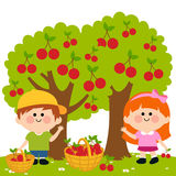 Kids harvesting cherries. Vector Illustration of two children, a boy and a girl picking cherries under the cherry trees Stock Photos