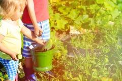 Kids harvesting cucumbers in garden Stock Images