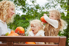 Kids harvesting Hokkaido pumpkins royalty free stock image