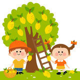 Kids harvesting lemons Stock Images