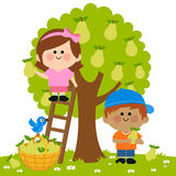 Kids harvesting pears Stock Images