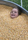 Fun In The Corn. Kids always have a great time around Halloween. One of the favorite places is the Pumpkin Patch. Families enjoy many activities such as hey royalty free stock image