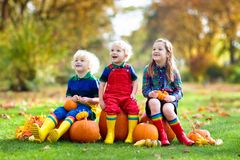 Kids having fun at pumpkin patch. Group of little children enjoying harvest festival celebration at pumpkin patch. Kids picking and carving pumpkins at country royalty free stock images