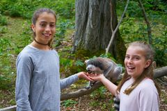 Kids having fun with ring tailed lemurs animals. Kids girls having fun with ring tailed lemurs animals outdoor royalty free stock images