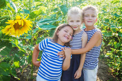 Kids having fun among sunflower field Royalty Free Stock Image