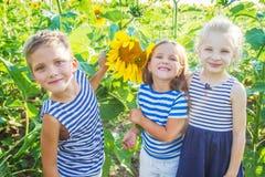 Kids having fun in sunflowers royalty free stock image