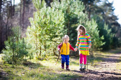 Kids hiking in autumn forest royalty free stock image