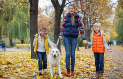 Kids with his dog labrador Royalty Free Stock Image