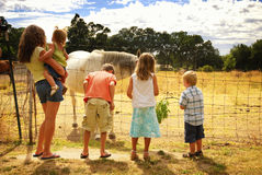Kids on Horse Farm Royalty Free Stock Image